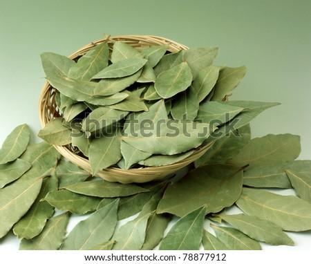 laurel leafs on gren background