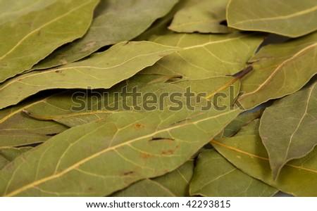 laurel leaves background
