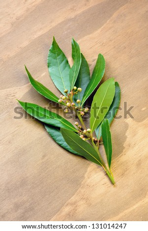 Laurel on a old wooden table - stock photo