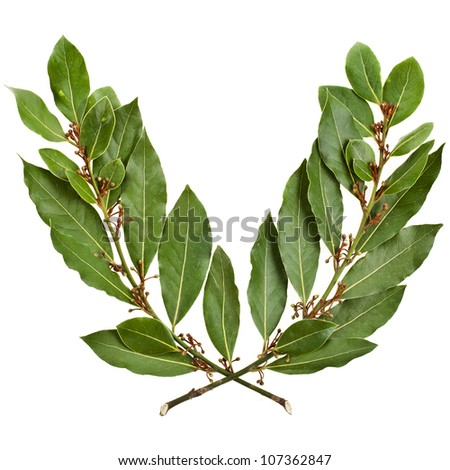 Laurel wreath , clipping path included ,isolated on white background