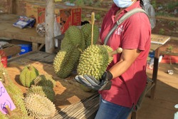 Lava Durian Sisaket means durian of Monthong, long-stemmed gibbon, durian that has a sweet taste. Medium aroma, fine texture, dry, yellow flesh uniformly in the whole fruit.