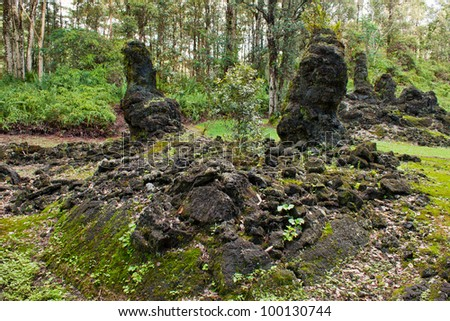 lava tree park in Big Island Hawaii