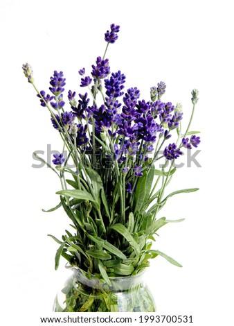 Lavand - Lavandula angustifolia plant with lila flowers Foto stock ©