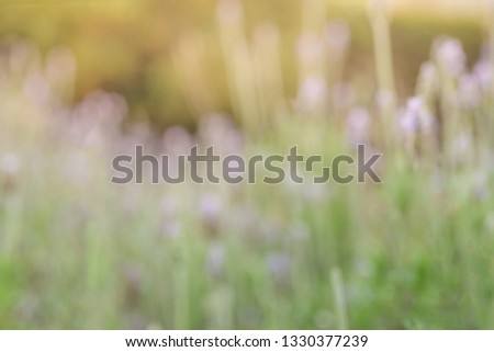 Lavandula is a genus of plants of the lamiaceae family, which contains about 60 species known as lavender, lavender, lavender or lavender, among many other common names #1330377239