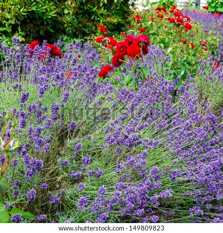 lavendel and roses