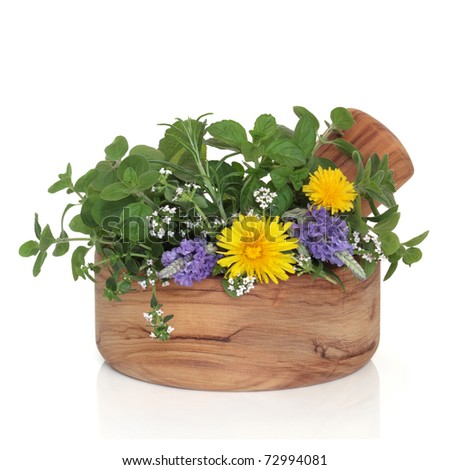 Lavender and thyme in flower with mint, rosemary and oregano herb leaf sprigs with wild dandelion flowers in an olive wood mortar with pestle, isolated over white background.