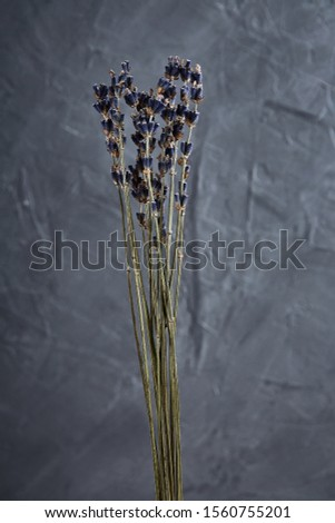 Lavender bouquet of dried flowers dried flowers on a gray background. Beautiful bouquet of dried flowers