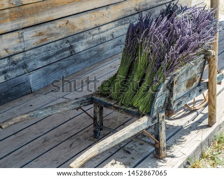 Lavender bunches sold at village markets in Provence #1452867065