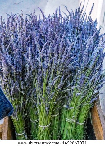 Lavender bunches sold at village markets in Provence #1452867071