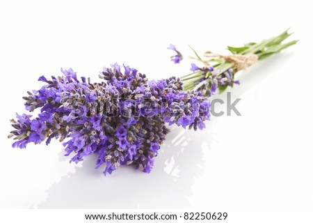 Lavender bundle bound with brown string isolated on white background. Aromatic herbs concept.