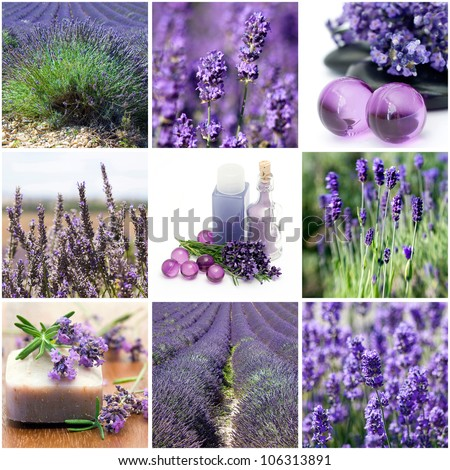 Lavender collage with nine photos