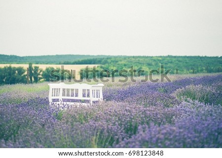 Lavender field with white bench Stock fotó ©