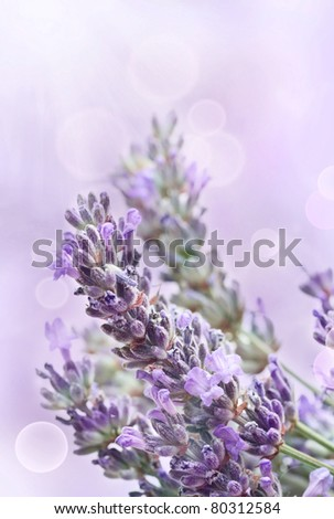Lavender flower background with beautiful purple colors and bokeh lights