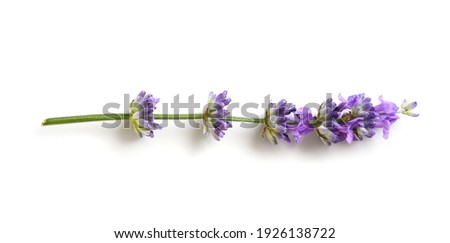 Lavender flower isolated on a white background. Flat lay Foto stock ©