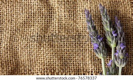 Lavender flower over natural burlap.With copy-space