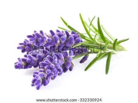 Lavender flowers Foto stock ©