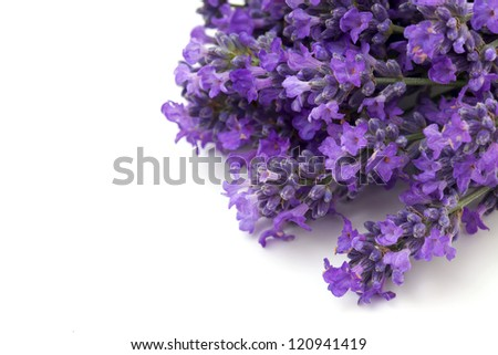 lavender flowers and empty space for your text