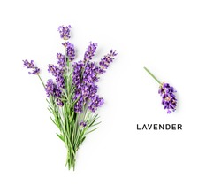 Lavender flowers and leaves creative layout isolated on white background. Top view, flat lay. Floral composition and design. Healthy eating and alternative medicine concept