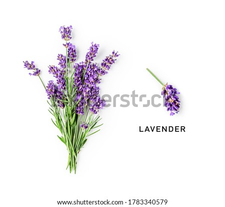 Lavender flowers and leaves creative layout isolated on white background. Top view, flat lay. Floral composition and design. Healthy eating and alternative medicine concept 商業照片 ©