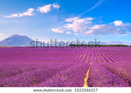 Lavender flowers blooming scented fields in endless rows. Landscape in Valensole plateau, Provence, France, Europe. #1023266257