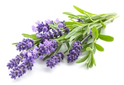 Lavender flowers bundle on a white background
