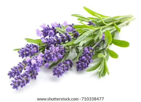 Lavender flowers bundle on a white background Сток-фото ©