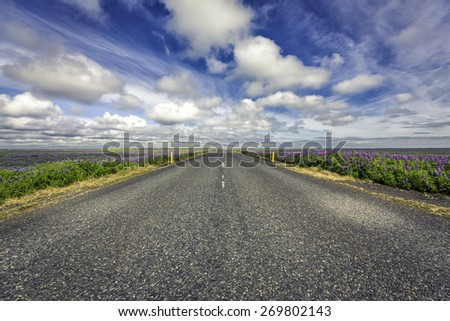 Lavender flowers by empty asphalt road in South Iceland