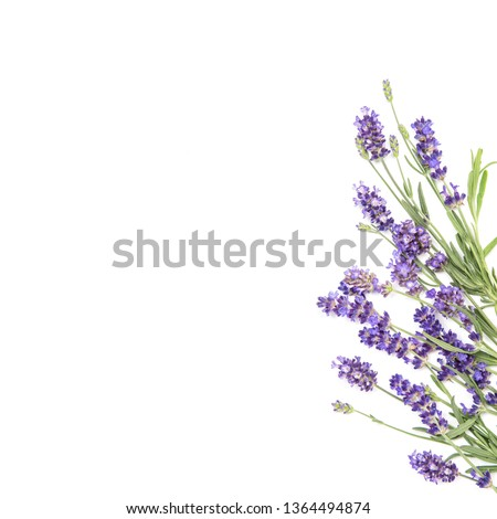 Lavender flowers. Floral border on white background