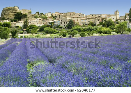 lavender flowers growing below ancient hill town in provence the south of france