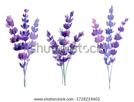 Lavender flowers in a watercolor style isolated, watercolor botanical illustration. Foto stock ©