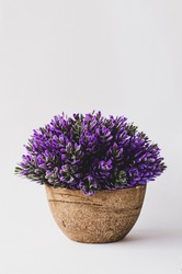 Lavender Flowers in brown pot on the white background