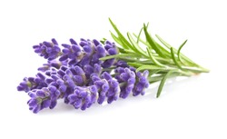 Lavender flowers in closeup