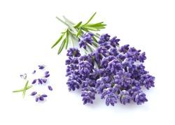 Lavender flowers in closeup