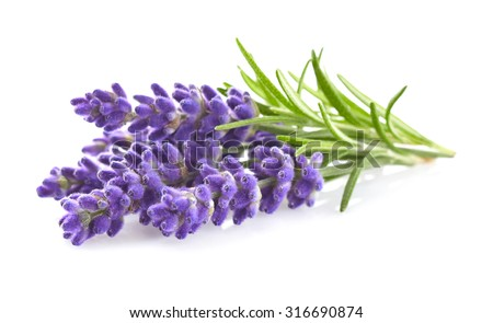 Lavender flowers in closeup Сток-фото ©