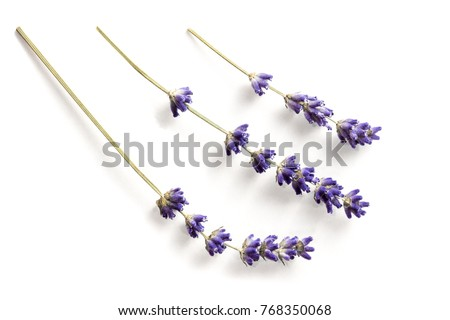 Lavender flowers isolated on white #768350068