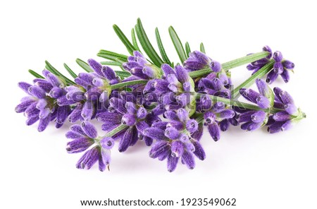 Lavender flowers isolated on white background           Foto stock ©