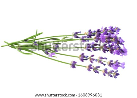 lavender flowers isolated on white background. bunch of lavender flowers. Foto stock ©