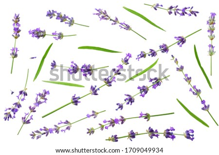 lavender flowers isolated on white background. top view Foto stock ©