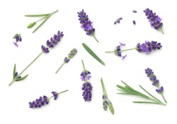 Lavender flowers isolated on white background. Top view, flat lay