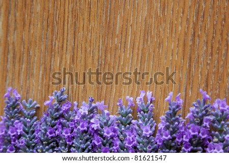 Lavender flowers on a background texture of a tree. Can be used as background