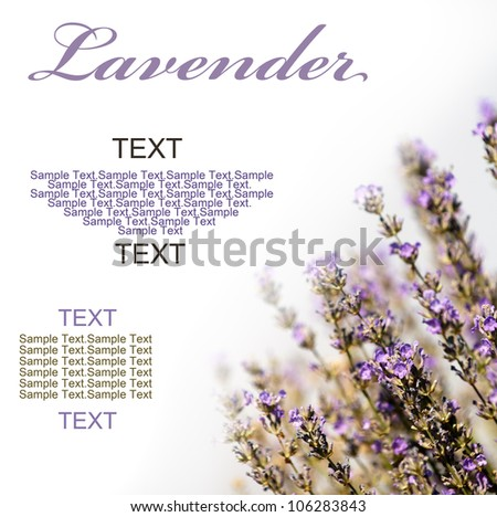 Lavender flowers on white Background.Room for text