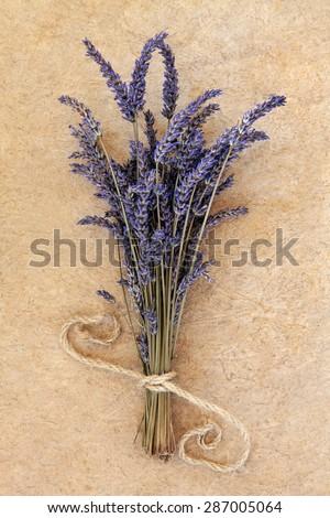 Lavender herb flower bunch over speckled handmade paper background. Lavandula angustifolia.