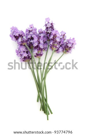 Lavender herb flowers isolated over white background. Lavandula.
