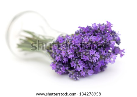 lavender in a glass pitcher