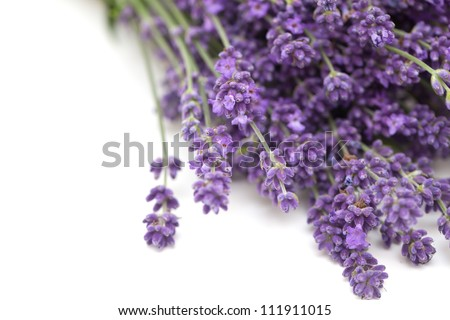 lavender isolated on white