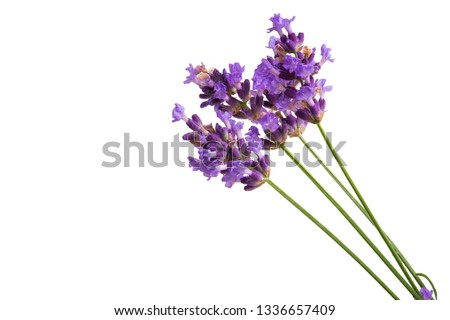 lavender isolated on white background Foto stock ©