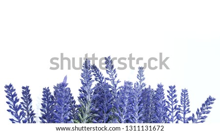 Lavender isolated on white background - copy space for editing #1311131672