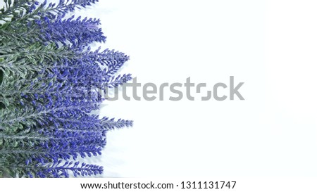 Lavender isolated on white background - copy space for editing #1311131747