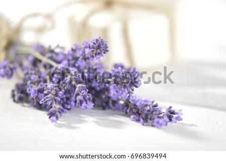 lavender,lilac lavender #696839494