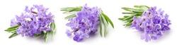 Lavender macro. Lavender flowers isolated. Bunch of lavender on white. Set on white background. Full depth of field.